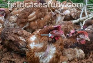 Lindude gripp, foto: https://fieldcasestudy.com/