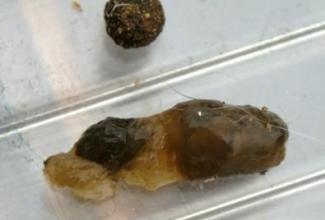 Küülikute haigus mukoidne enteropaatia,  foto Cotton Tails Rescue