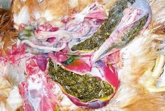 Muru ja muu kiuline materjal on täitnud lihasmao ja liikunud edasi kaksteistsõrmiksoolde.