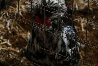 Raiba-Plunksna-linnupargi-kulastus-31