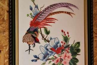 Raiba-Plunksna-linnupargi-kulastus-4